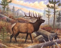 """28"""" x 22"""" Moose Pictures"""