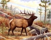 "20"" x 16"" Moose Decor"