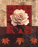 White Chinese Rose Framed Print