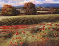 Fields of Provence II Fine Art Print
