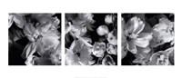 """Delphiniums by Darlene Shiels - 28"""" x 12"""""""