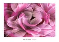 "Infatuation by John Von benzon - 28"" x 20"""