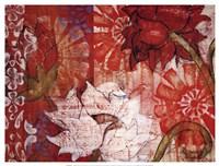 Crimson Malay II Fine Art Print