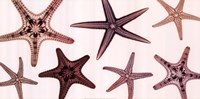 "24"" x 12"" Starfish Pictures"