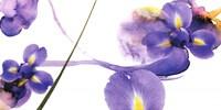 "Lucid Iris 2 by S & r Rasheed - 39"" x 20"""
