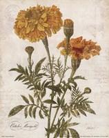 October Marigold Fine Art Print