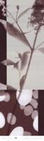 Botanica 10 Fine Art Print