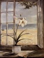 Ocean Amaryllis Fine Art Print
