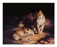 "Pair Of Leopards by William Huggins - 33"" x 27"""