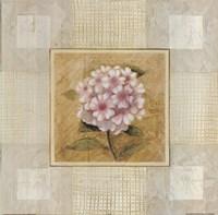 Pink White Flower Fine Art Print