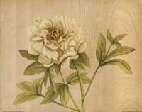 Yellow Flower Fine Art Print
