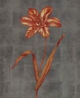 Orange Flower - full bloom Fine Art Print