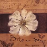White Flower (brown) Fine Art Print