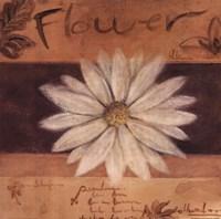 White Flower - words Fine Art Print