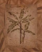 Leaves - brown Fine Art Print