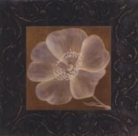 Tan Flower - full bloom Fine Art Print