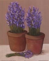 Purple Flowers In Pots Fine Art Print
