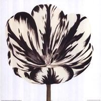 Black White Flower Fine Art Print