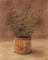 Plant In Orange Can Fine Art Print