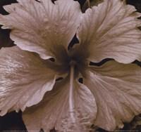 White Flower Fine Art Print