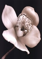 White Black Speckled Flower Fine Art Print