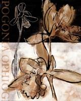 Blooming Orchid II Fine Art Print