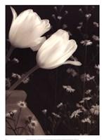 Glowing Tulip II Fine Art Print