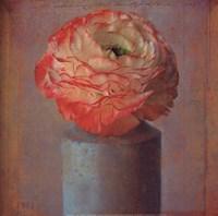 Floral Study I Framed Print