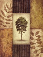 North American Pine Fine Art Print