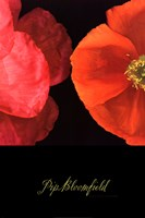 Dual Poppy Left Fine Art Print