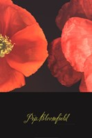 Dual Poppy Right Fine Art Print