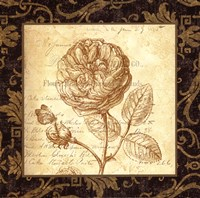 Rose - with a border Fine Art Print