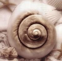 "Iridescent Seashell I by Donna Geissler - 12"" x 12"", FulcrumGallery.com brand"