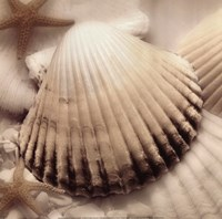 "Iridescent Seashell II by Donna Geissler - 12"" x 12"", FulcrumGallery.com brand"