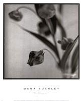 """Sandersonia I by Dana Buckley - 13"""" x 16"""""""
