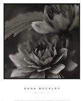 Water Lily II Fine Art Print