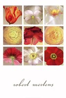 Floral Collection Fine Art Print
