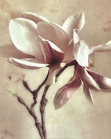 "Pink Magnolia II by Donna Geissler - 16"" x 20"", FulcrumGallery.com brand"