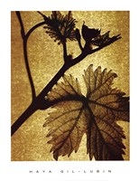 "Golden Time II by Haya Gil-lubin - 13"" x 17"" - $9.99"
