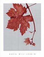 Red Bud Fine Art Print