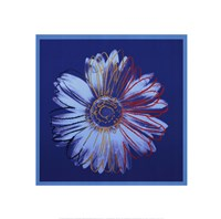 Daisy, c.1982 (blue on blue) Fine Art Print