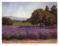 "Lavender Fields by Susan Hoehn - 34"" x 26"""