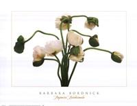 "Papavar Nudicale by Barbara Bordnick - 24"" x 19"""