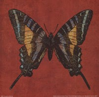 """Cranberry Butterfly by Katie Pertiet - 8"""" x 8"""", FulcrumGallery.com brand"""