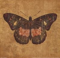 Ochre Butterfly Fine Art Print
