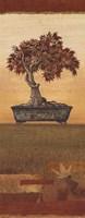 Bonsai IV - Petite Fine Art Print