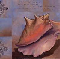 Sanibel Conch