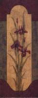 Greek Iris I - Petite Fine Art Print