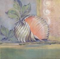 Tranquil Seashells II Framed Print