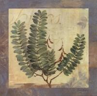 Leaf Botanicals II Framed Print